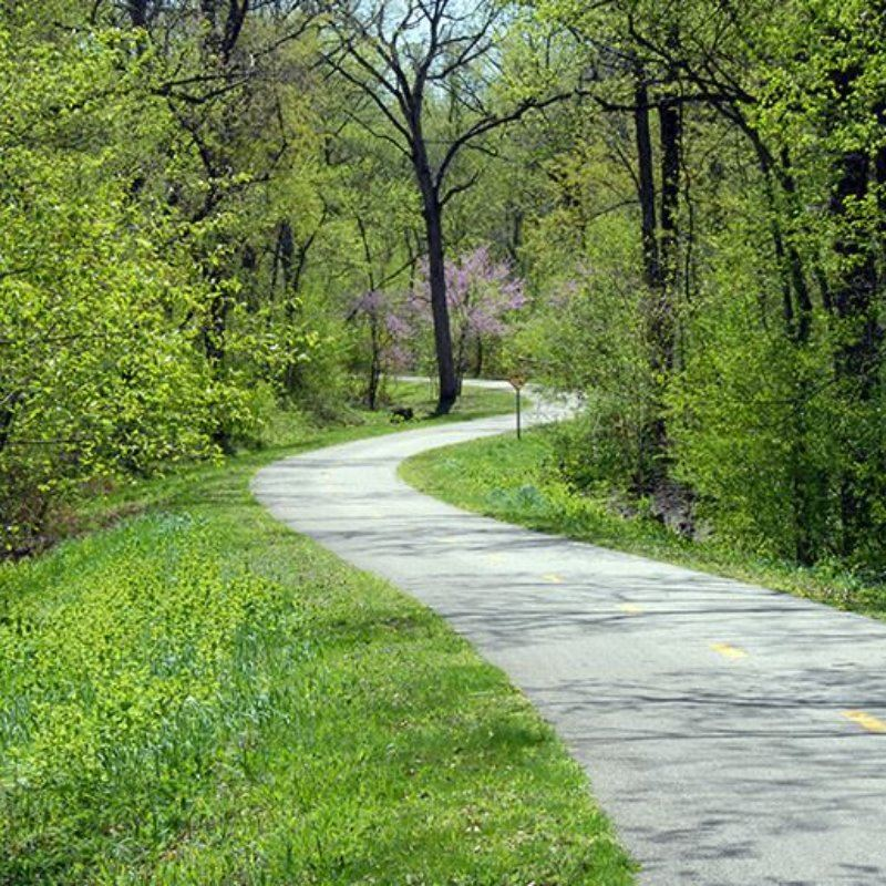 a bike trail through green woods