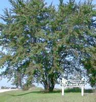 Grayslake - Tree City USA